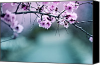Pink Flower Branch Canvas Prints - Spring Colors Canvas Print by Khoa Vu