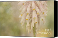 Dreamy Flower Canvas Prints - Spring Dream Canvas Print by Reflective Moments  Photography and Digital Art Images
