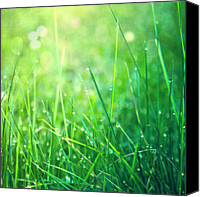 Blade Canvas Prints - Spring Green Grass Canvas Print by Dirk Wüstenhagen Imagery