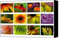 Fine Arts Photography Canvas Prints - Spring Greetings Canvas Print by Juergen Roth