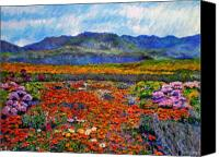 Wild-flower Canvas Prints - Spring in Namaqualand Canvas Print by Michael Durst