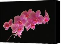 Nature Artwork Canvas Prints - Spring Orchids Canvas Print by Juergen Roth
