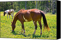 Susan Leggett Canvas Prints - Spring Pasture Canvas Print by Susan Leggett