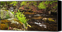 Calming Canvas Prints - Spring Stream Canvas Print by Bill  Wakeley