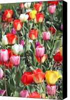 Color Glass Art Canvas Prints - Spring Tulips 3 Canvas Print by Robert Pearson