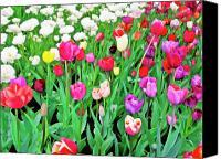 Flower Images Canvas Prints - Spring Tulips Flower Field I Canvas Print by Artecco Fine Art Photography - Photograph by Nadja Drieling