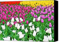 Flower Images Canvas Prints - Spring Tulips Flower Field II Canvas Print by Artecco Fine Art Photography - Photograph by Nadja Drieling