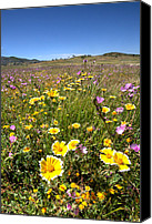 National Parks Canvas Prints - Spring Wildflowers 1 Canvas Print by Peter Tellone