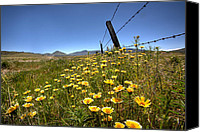 National Parks Canvas Prints - Spring Wildflowers 4 Canvas Print by Peter Tellone