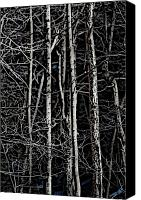 Ladnscape Canvas Prints - Spring Woods Simulated Woodcut Canvas Print by David Lane
