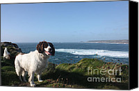 Sennen Cove Canvas Prints - Springer Spaniel Dog in Sennen Cove Canvas Print by Terri  Waters