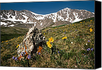 Peak Canvas Prints - Springtime in the Rockies Canvas Print by Joe Bonita
