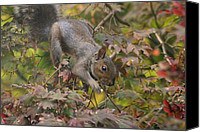 Wild Pyrography Canvas Prints - Squirrel In Fall Canvas Print by Valia Bradshaw