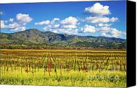 Sunny Vineyard Photo Canvas Prints - Stags Leap Mustards Canvas Print by Mars Lasar