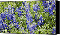 Bluebonnets Canvas Prints - Stained Glass Bluebonnets Canvas Print by Betty LaRue