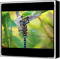 Dragonfly Canvas Prints - Stained Glass Dragonfly #macro_gardener Canvas Print by Chris Barber