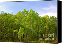 Lush Canvas Prints - Stand of Quaking Aspen trees Canvas Print by Christine Till