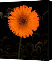 Orange Black Canvas Prints - Standing Tall Canvas Print by Suzanne Gaff