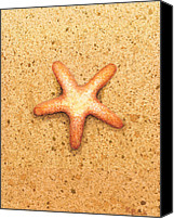 Featured Canvas Prints - Star Fish Canvas Print by Katherine Young-Beck