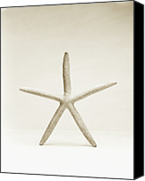 White Starfish Canvas Prints - Star Fish Shell, Close-up Canvas Print by Finn Fox