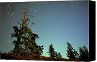 Startrail Canvas Prints - Star Trails, North Star And Old Douglas Canvas Print by David Nunuk