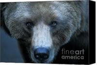 North American Wildlife Canvas Prints - Stare Down Canvas Print by Sandra Bronstein