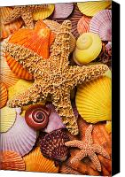 Yellow Canvas Prints - Starfish and seashells  Canvas Print by Garry Gay