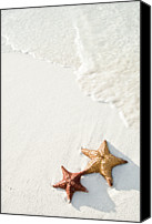 Animal Photo Canvas Prints - Starfish On Tropical Beach Canvas Print by Mehmed Zelkovic