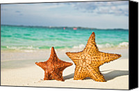 Sea Animals Canvas Prints - Starfish On Tropical Caribbean Beach Canvas Print by Mehmed Zelkovic