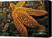 Regeneration Photo Canvas Prints - Starfish Canvas Print by Paul Ward