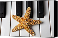 White Starfish Canvas Prints - Starfish Piano Canvas Print by Garry Gay