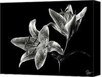 Flower Photos Canvas Prints - Stargazer Lily in Black and White Canvas Print by Endre Balogh