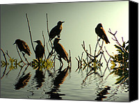 Roost Canvas Prints - Starling Sunset Canvas Print by Sharon Lisa Clarke