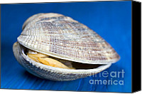 Sea Shells Canvas Prints - Steamed clam Canvas Print by Frank Tschakert
