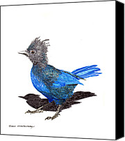 Fixtures Drawings Canvas Prints - Steller s Blue Jay Canvas Print by Jack Pumphrey