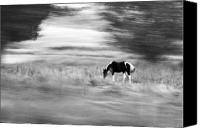 Horse Photographs Canvas Prints - Still But In Motion Canvas Print by James Steele