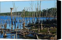 Artworks Canvas Prints - Still Wood - Manasquan Reservoir Canvas Print by Angie McKenzie