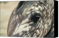 Equine Pastels Canvas Prints - Stillness Canvas Print by Kim McElroy