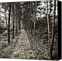 Son Canvas Prints - Stone Path Canvas Print by Skip Nall