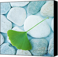 Squared Canvas Prints - Stones And A Gingko Leaf Canvas Print by Priska Wettstein