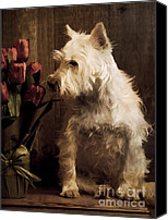 Westie Canvas Prints - Stop and Smell the Flowers Canvas Print by Edward Fielding