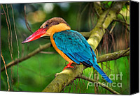 Kingfisher Canvas Prints - Stork-billed kingfisher Canvas Print by Louise Heusinkveld