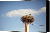 Morocco Canvas Prints - Storks Canvas Print by Copyright Adrianko