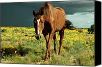 Storm Canvas Prints - Storm Horse Canvas Print by photo  Jennifer Esperanza