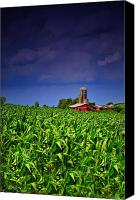 Country Scenes Canvas Prints - Stormy Corn Canvas Print by Emily Stauring
