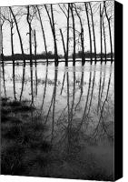 Floods Canvas Prints - Stranded Trees Canvas Print by Malc McHugh