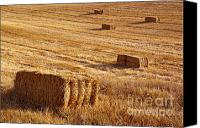 Feed Canvas Prints - Straw Field Canvas Print by Carlos Caetano