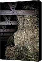 Cow Barn Canvas Prints - Straw To The Rafters Canvas Print by Odd Jeppesen