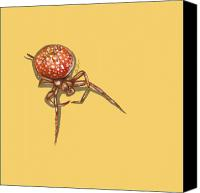 Insects Painting Canvas Prints - Strawberry Spider Canvas Print by Jude Labuszewski