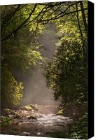 Parkway Canvas Prints - Stream Light Canvas Print by Steve Gadomski